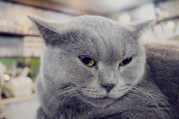 可爱猫咪不开心图片