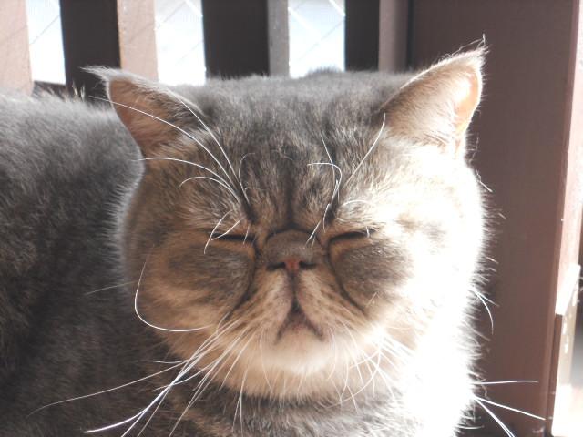 猫趴下的可爱图片