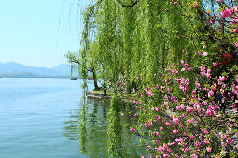 春天野外风景有柳树