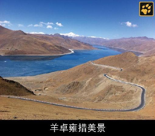 西藏/#狼行天下2013#西藏寻狼之旅将于4月11日至19日正式开启,