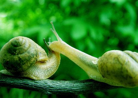个人 美丽/蜗牛大概是在6亿年前就存在的生命体,脆弱的蜗牛却能够在皮肤...