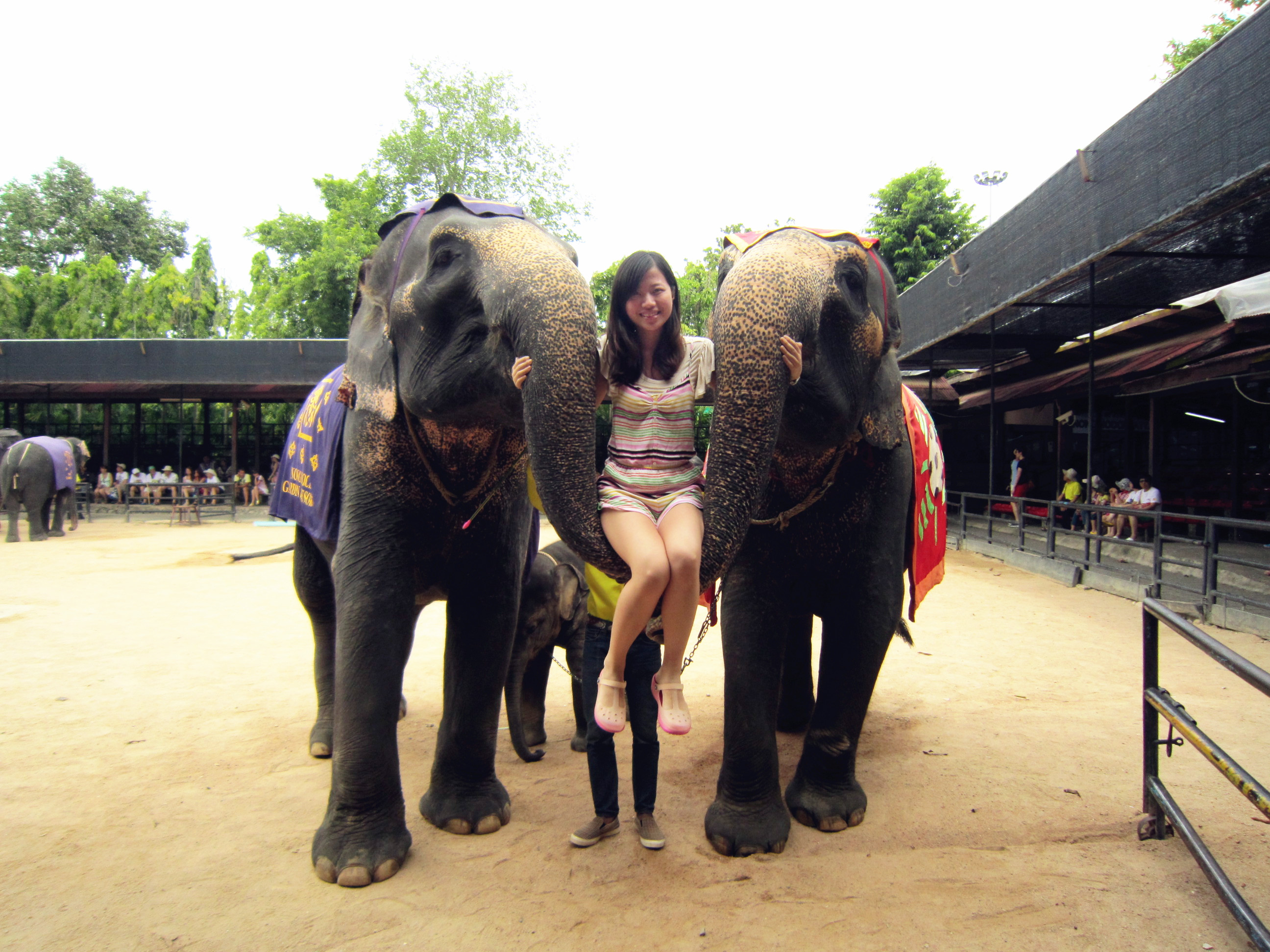 大象 动物 2592_1944