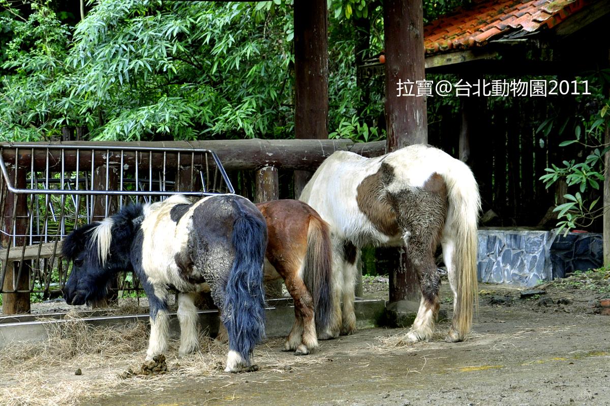看鸟推荐去桂林七星公园里的动物园