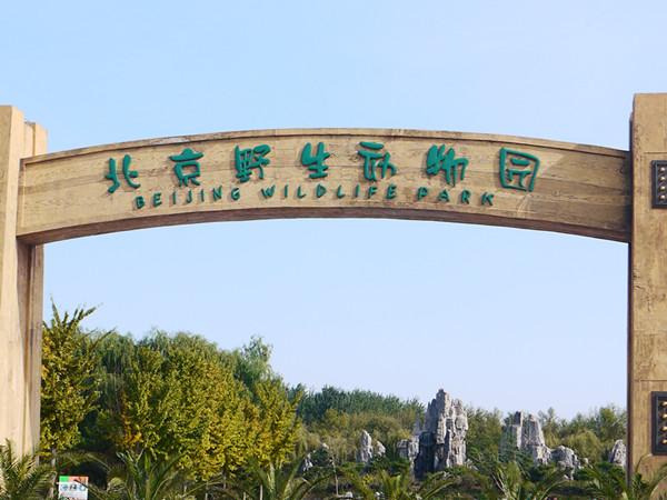 抓住秋天的尾巴,北京野生动物园游记
