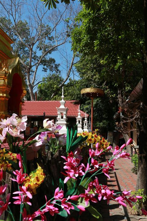 寺廟周圍花開得特別歡也特別艷麗,在這個環境中顯得特別美麗.