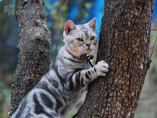 夸张表情猫分享展示