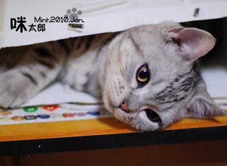 纸袋动物小猫手工制作步骤