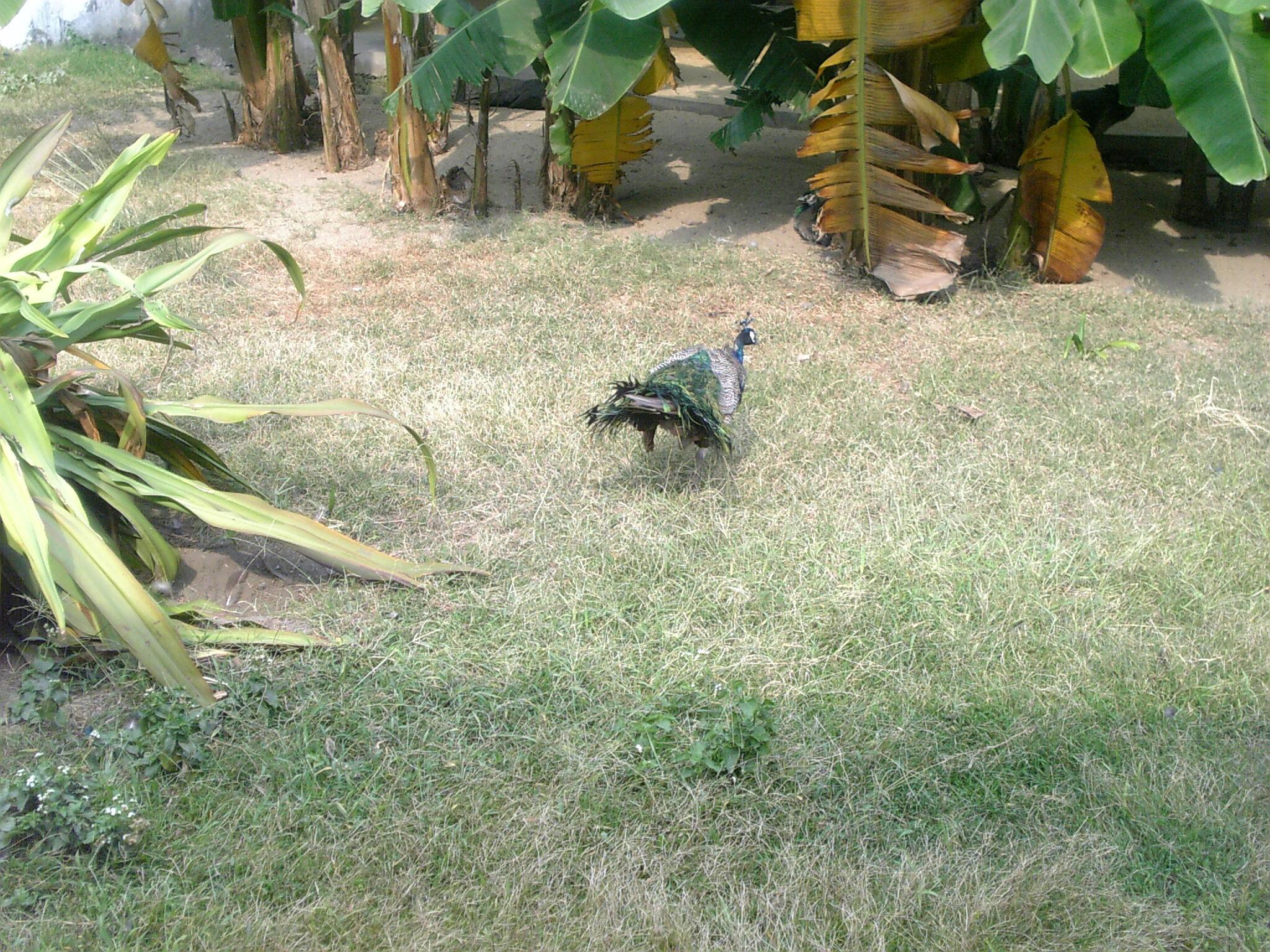 广州动物园游记
