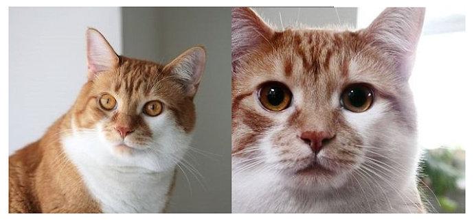 【当猫咪遇到美瞳】超级可爱的猫咪变身前后图