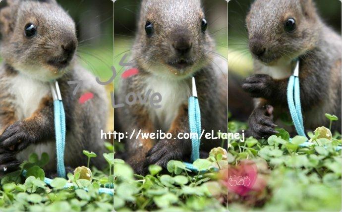 图图/后记: 小动物的生命很脆弱,图图两个月左右大,生命已经结束。