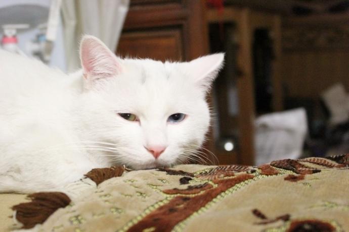 猫咪可爱照片莫惹老子