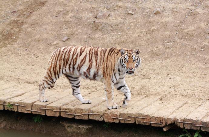 游常州淹城野生动物世界