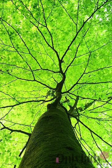 茁壮成长,渐渐地,小树苗长大了,有的成为了顶天立地的参天大树,有的在