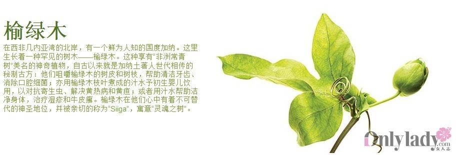 榆绿木便是其中之一,非洲原住民嚼烂榆绿木的树皮和树叶,将其敷在伤