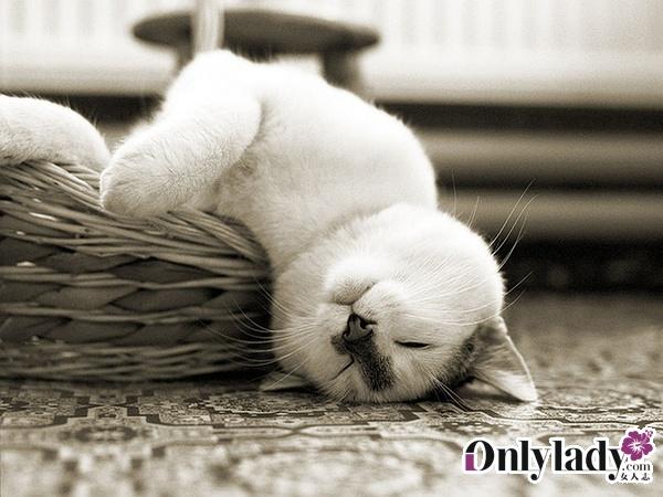 1.猫在什么时候会就地打滚、舒展四肢、张开嘴巴、舞动爪子,并轻轻摇摆尾梢对于陌生人,猫很少冒险做此姿态,因为仰面袒腹会使它极易受到伤害,因此猫做出此种姿态时是在说:我信任你! 2.猫辨认气味的能力很强,和你相见时它会先侧身擦擦你,然后坐下来品尝你的味道办法是用舌头舔舔它刚才仔细地在你身上挨擦过的毛。 3.